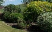 hedging 2