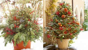 Two Different Holiday Containers