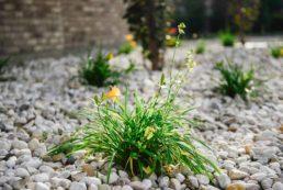 Stone Garden and Yellow Flower