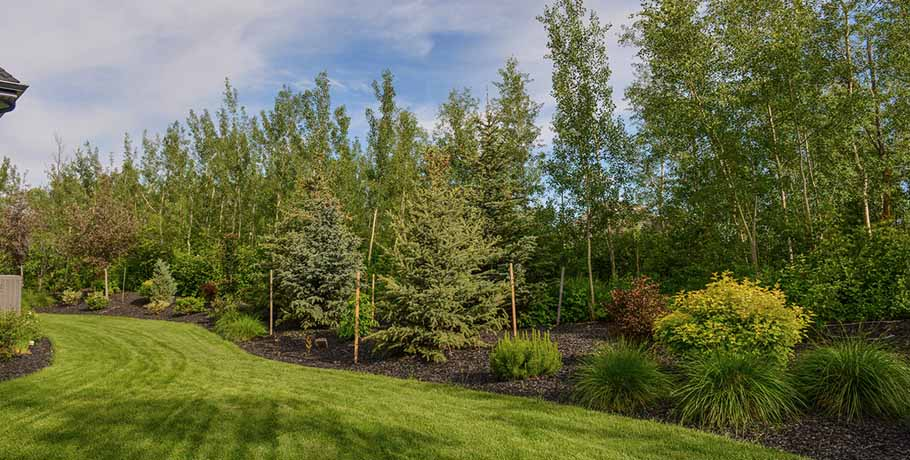 Backyard with trees as noise barrier