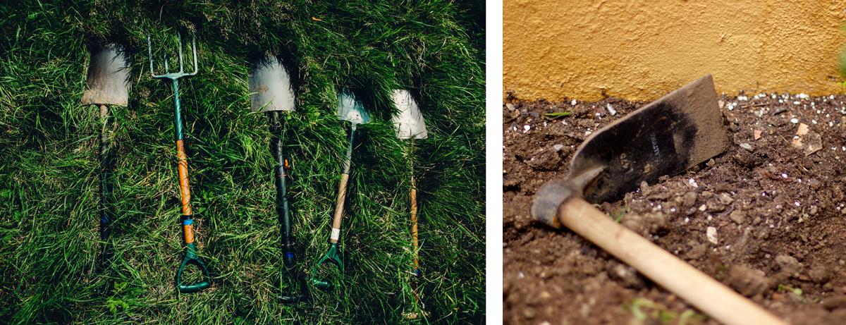 Rejuvenating Your Garden for Spring