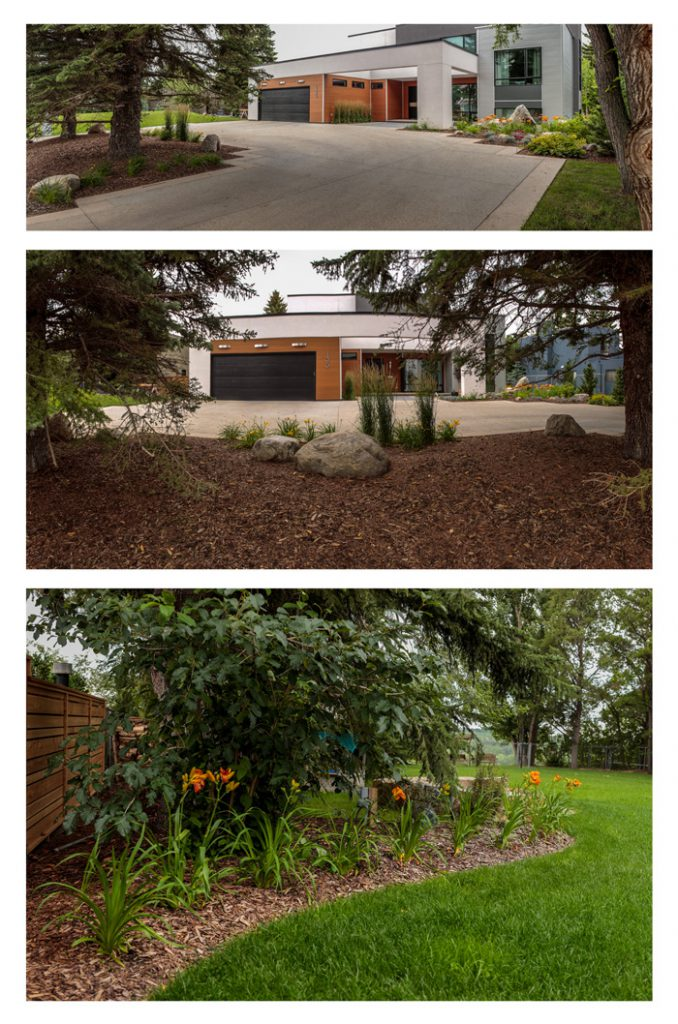 Incorporating Mature Trees into an Infill Landscape Design