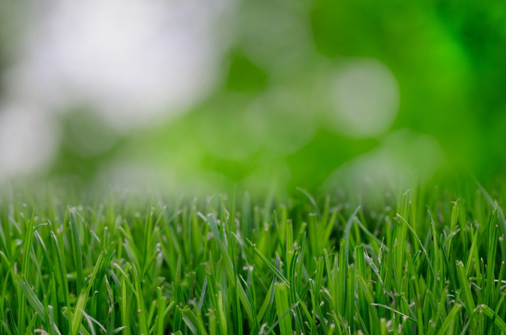 Aerate your lawn.