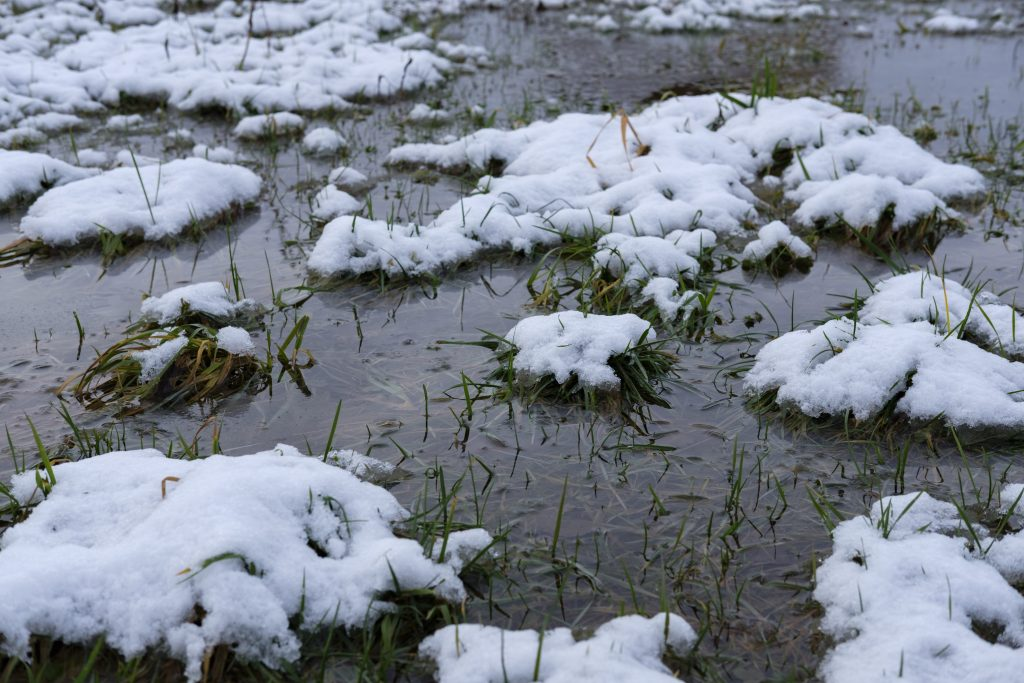 Melting Snow can be harmful to your plants