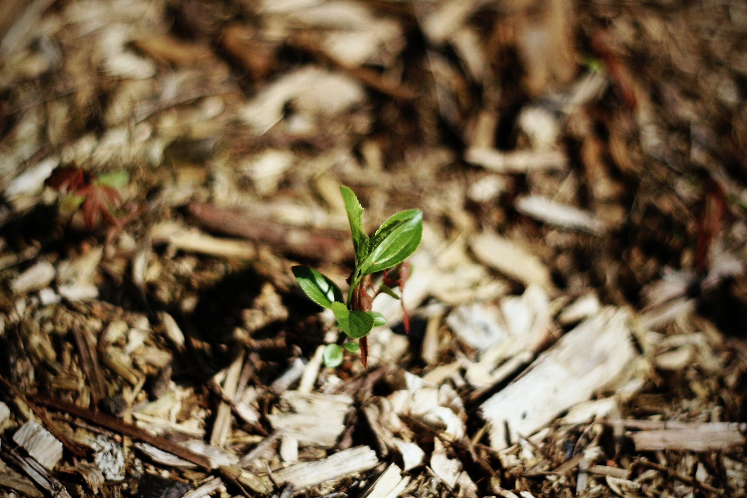 Your Checklist for Spring Landscape Maintenance