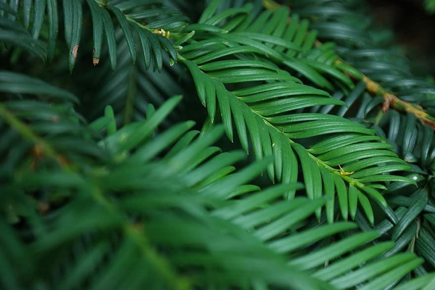 Evergreens for colour in the Winter season