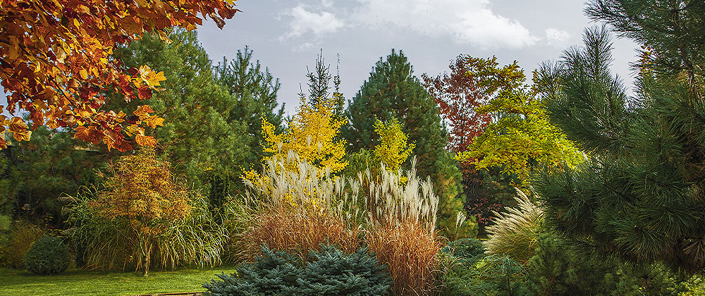 gorgeous trees in fall Salisbury Landscaping