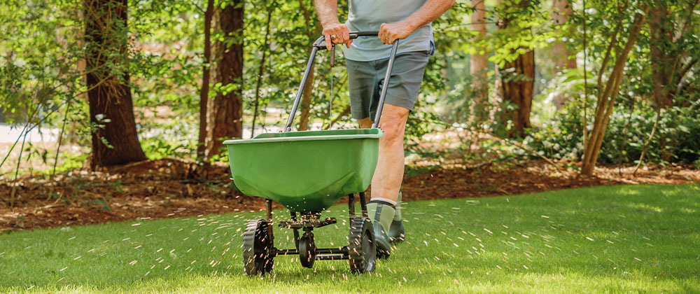 man fertilizing lawn