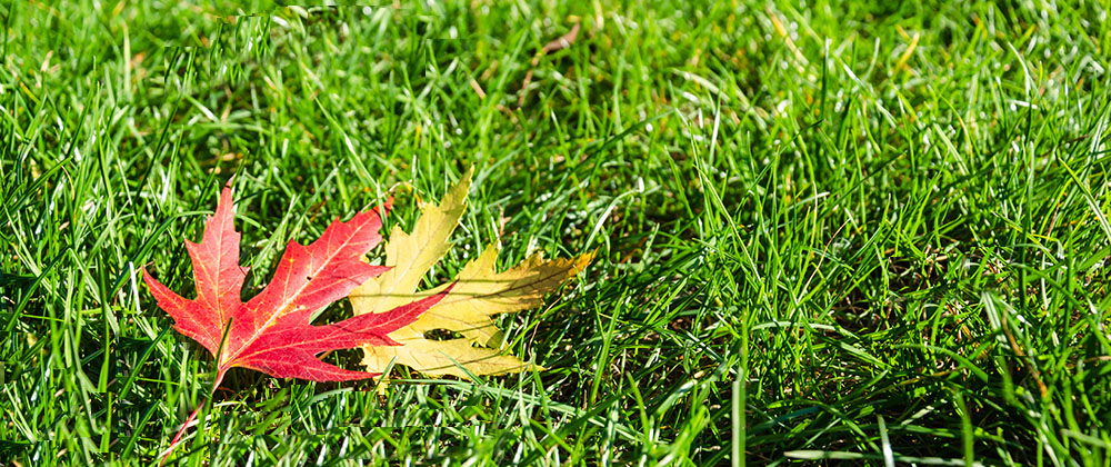 fall leaves on green grass Salisbury Landscaping