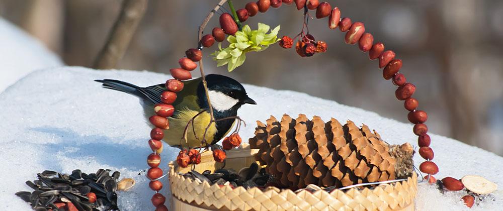 DIY bird feeder with bird eating