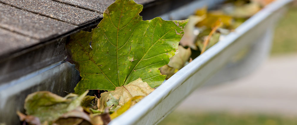 Salisbury Landscaping cleaning troughs on home