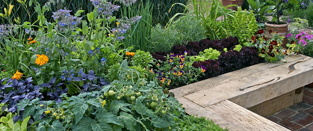 raised garden beds filled with edible plants