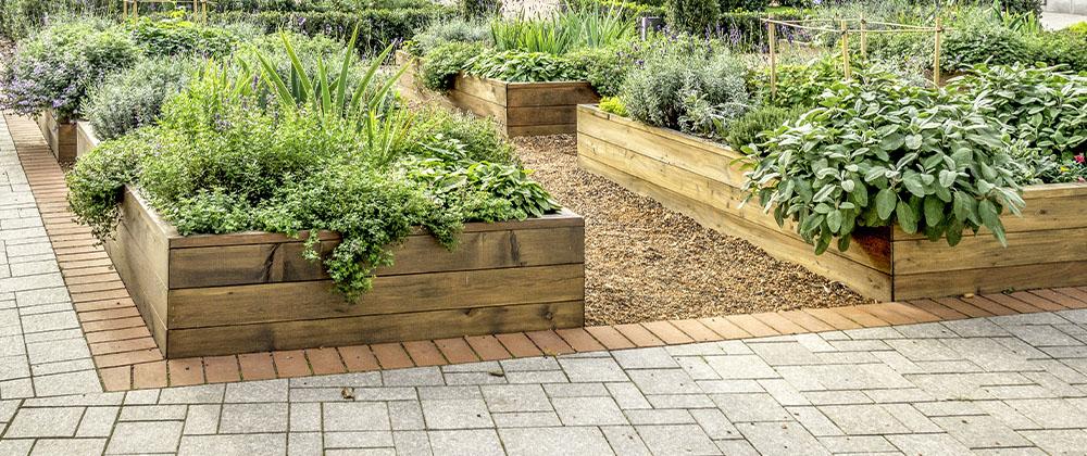 raised veggie and herb garden beds