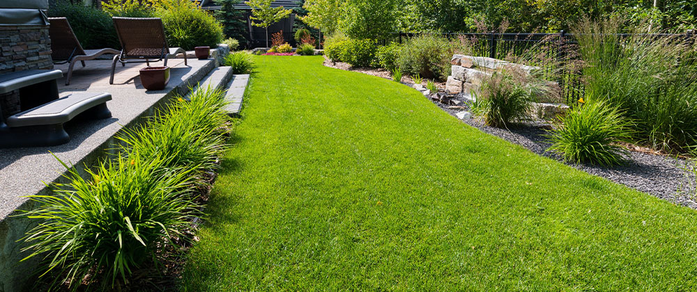 green and healthy back lawn