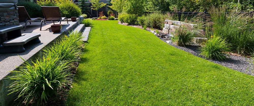 green and healthy back lawn Salisbury Landscape