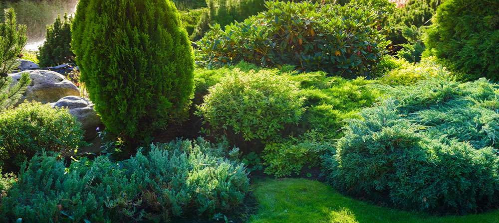 trees and shrubs in backyard