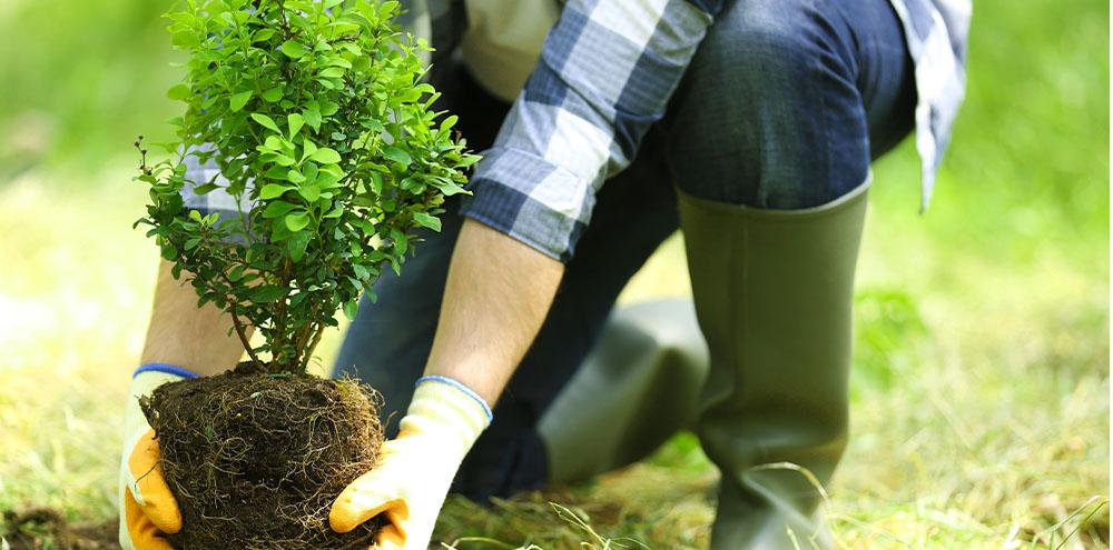 shrub being planted in garden Salisbury Landscape