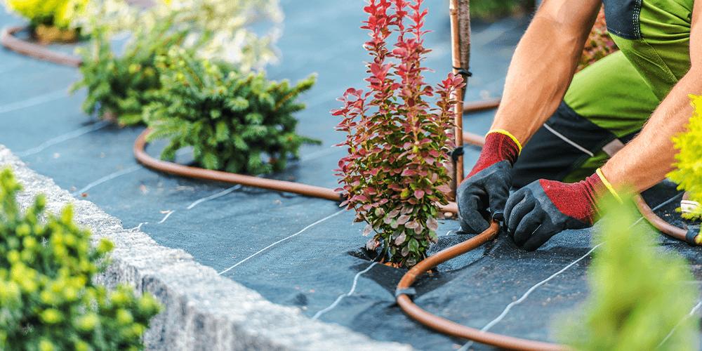 drip irrigation in garden